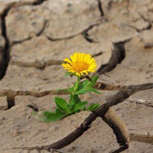 overlevelse-blomst
